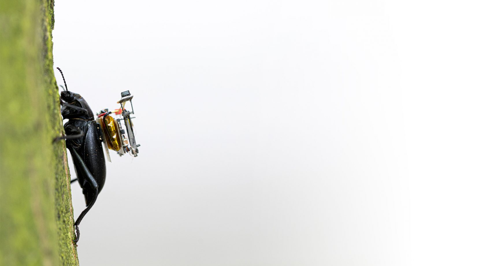 A GoPro for beetles: Researchers create a robotic camera backpack for insects Banner