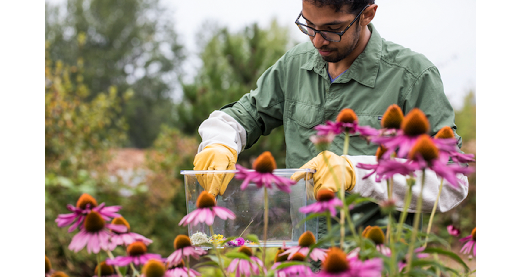 UW ECE doctoral student Vikram Iyer featured in AAAS for murder hornet tracking; finding ways to meld nature and science Banner